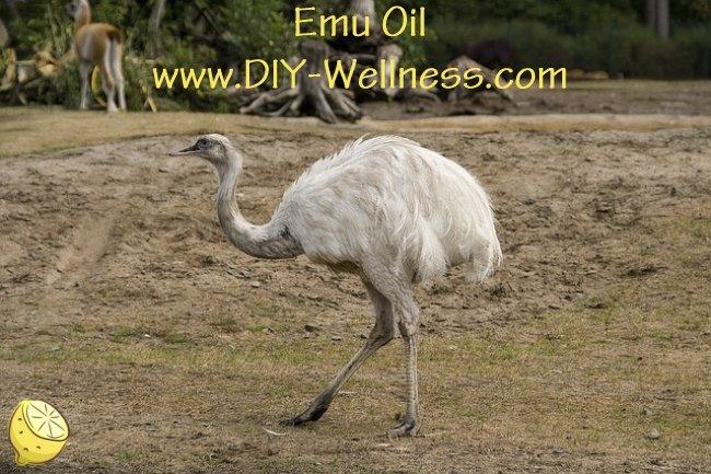 Emu Oil from DIY-Wellness.com