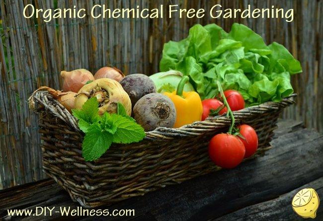 Organic Chemical Free Gardening