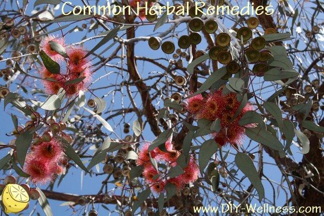 Common Herbal Remedies