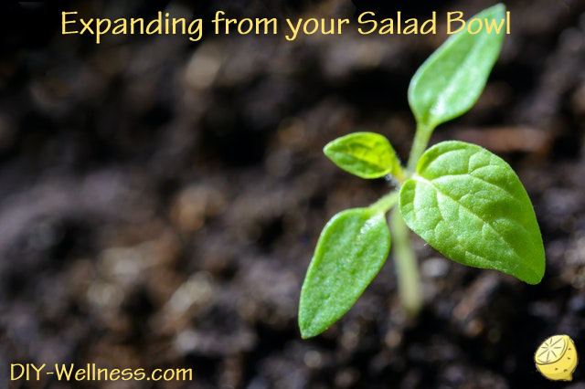 Expanding from your Salad Bowl! A Free Article from DIY-Wellness.com!
